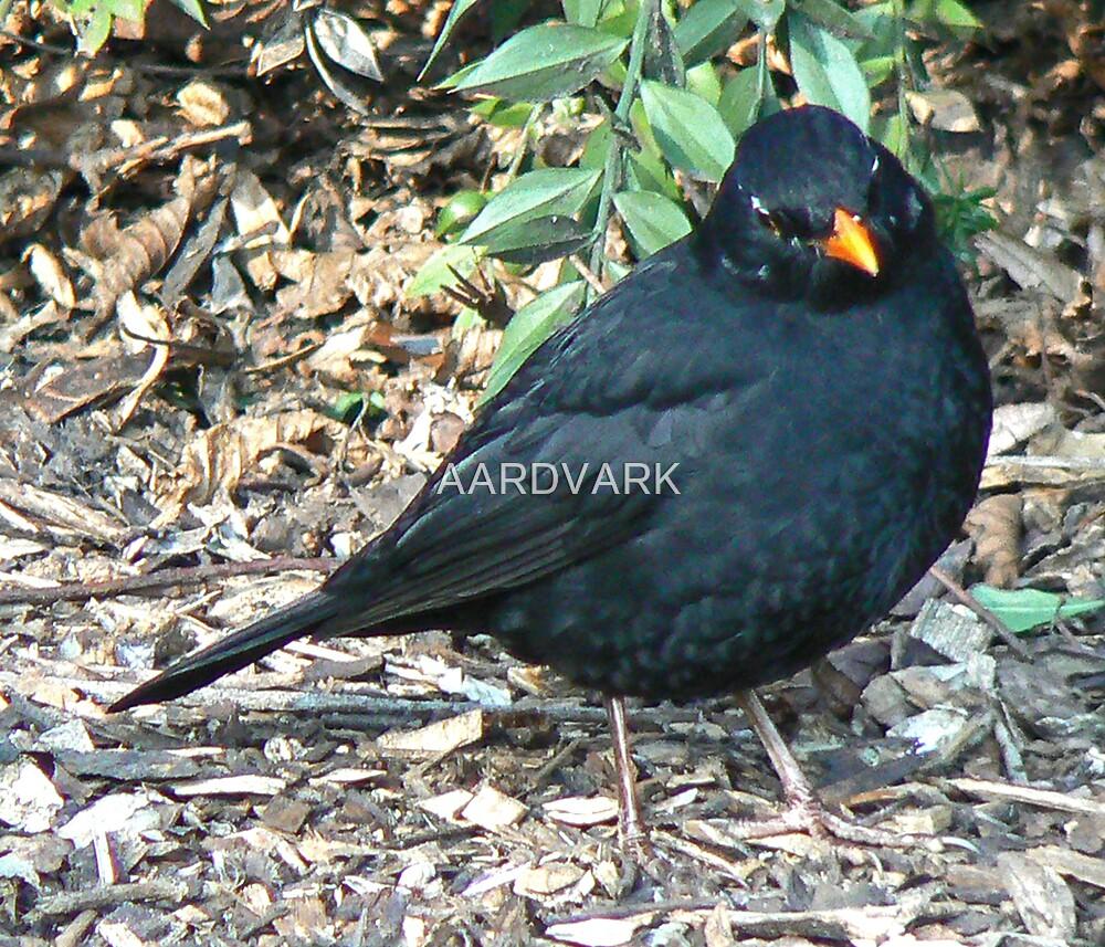 A Blackbird  (II) by AARDVARK