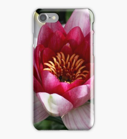 Water lily shy homeowner included iPhone Case/Skin