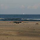 Beach View by patjila