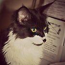 Stray Cat Portrait Sepia by patjila