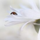 Ladybird on white flower by Ellen van Deelen
