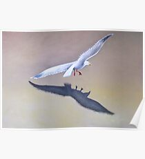 Seagull in Flight 2 Poster