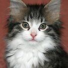 Meet Harry! by Lynne Prestebak