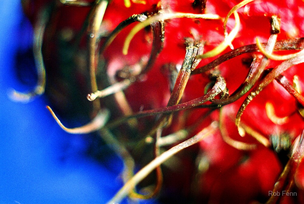 Rambutan detail by Rob Fenn