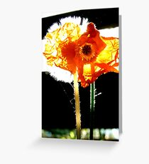 Natures Fire works! - Poppy & Dandelion - NZ Greeting Card