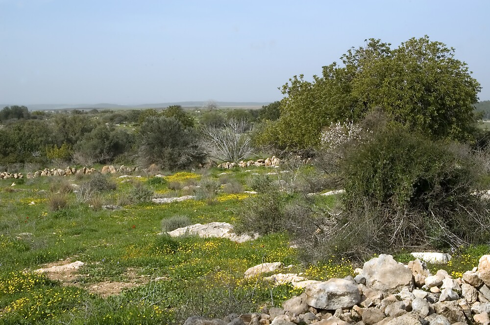 Near The Negev by Michael Redbourn