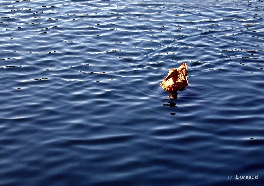 Afternoon Swim by Bureaud
