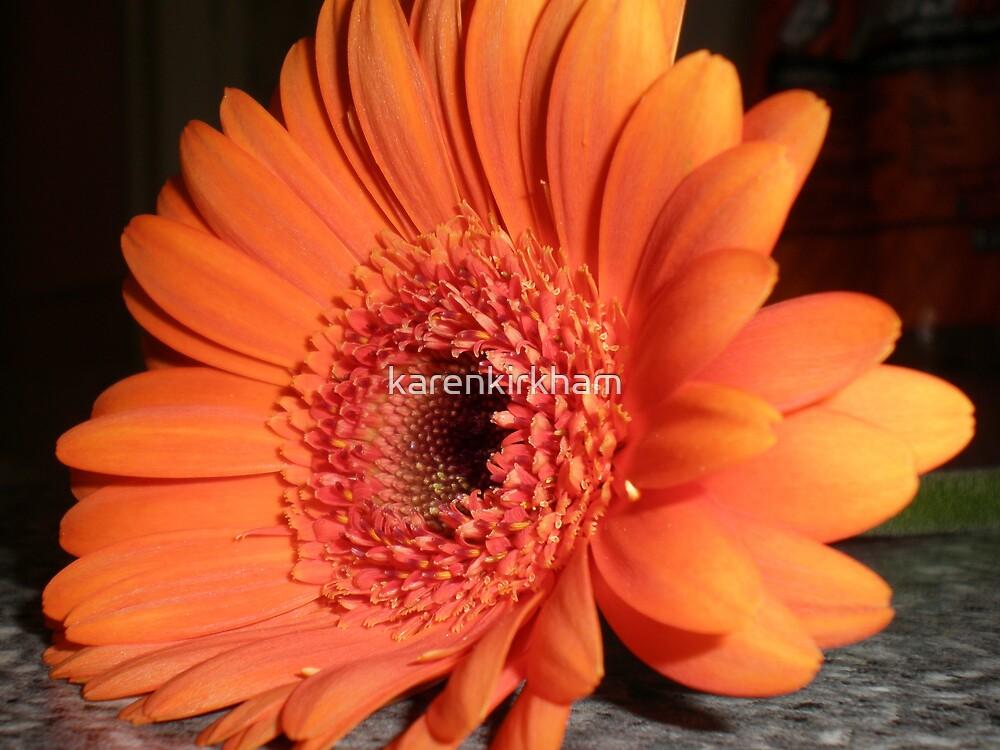 Orange Gerbera 2 by karenkirkham