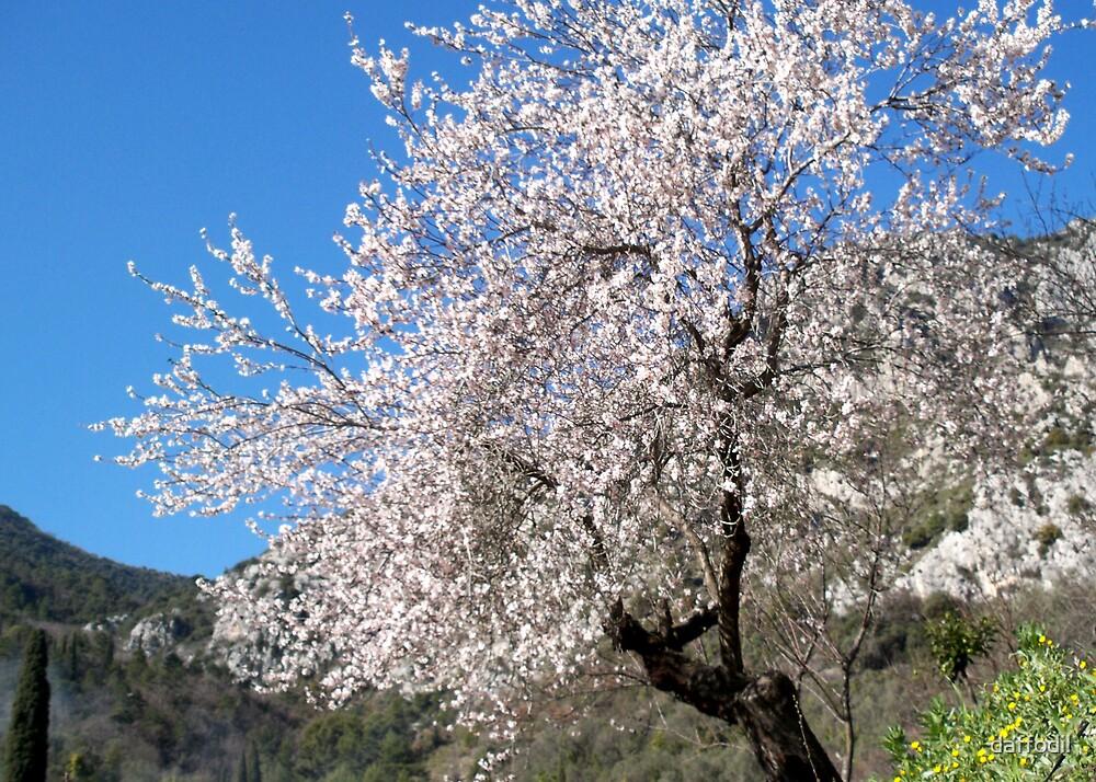 Spring  by daffodil