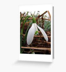 Snowdrop (Galanthus nivalis) Greeting Card