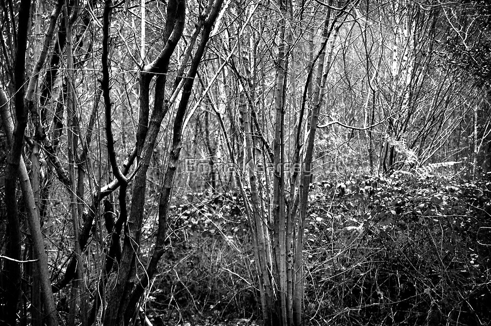 Thicket by Emma Kearsey