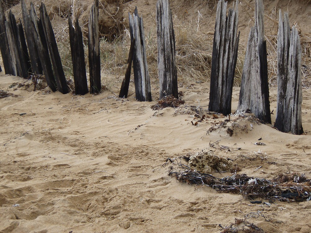 burnt out fence planks at the beach by gaylene