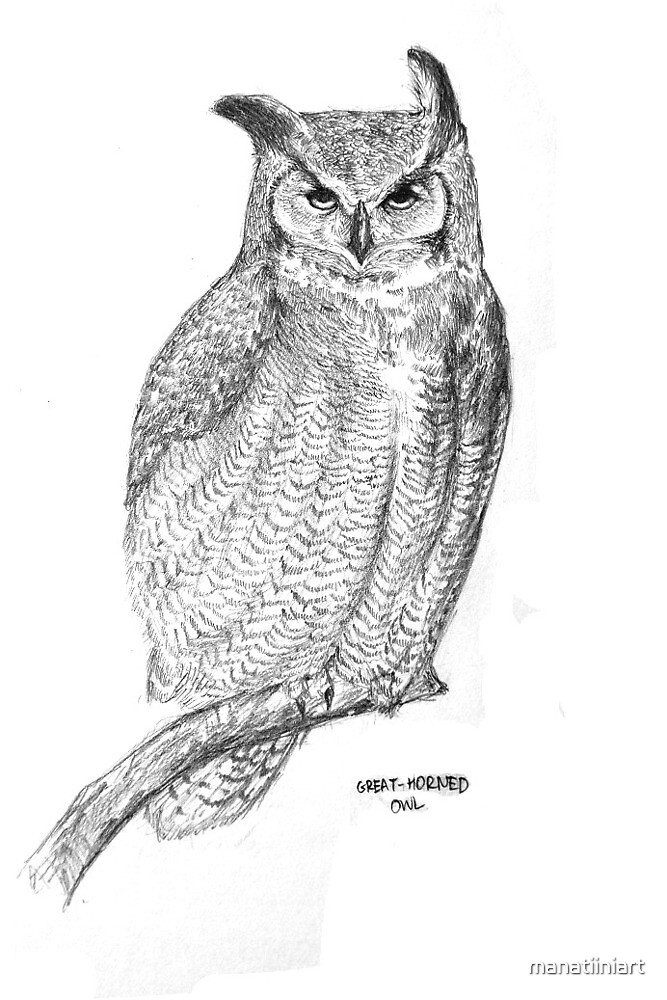 Great- Horned Owl by manatiiniart
