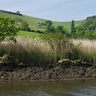 Reed Beds On The Dart by lezvee