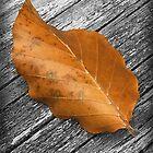 One Leaf by Fay270