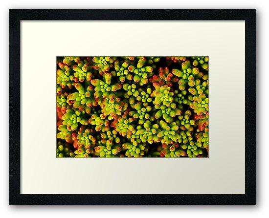 succulent botanical photography by SammyPhoto