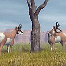 Pronghorn Antelope Fine Art by Walter Colvin
