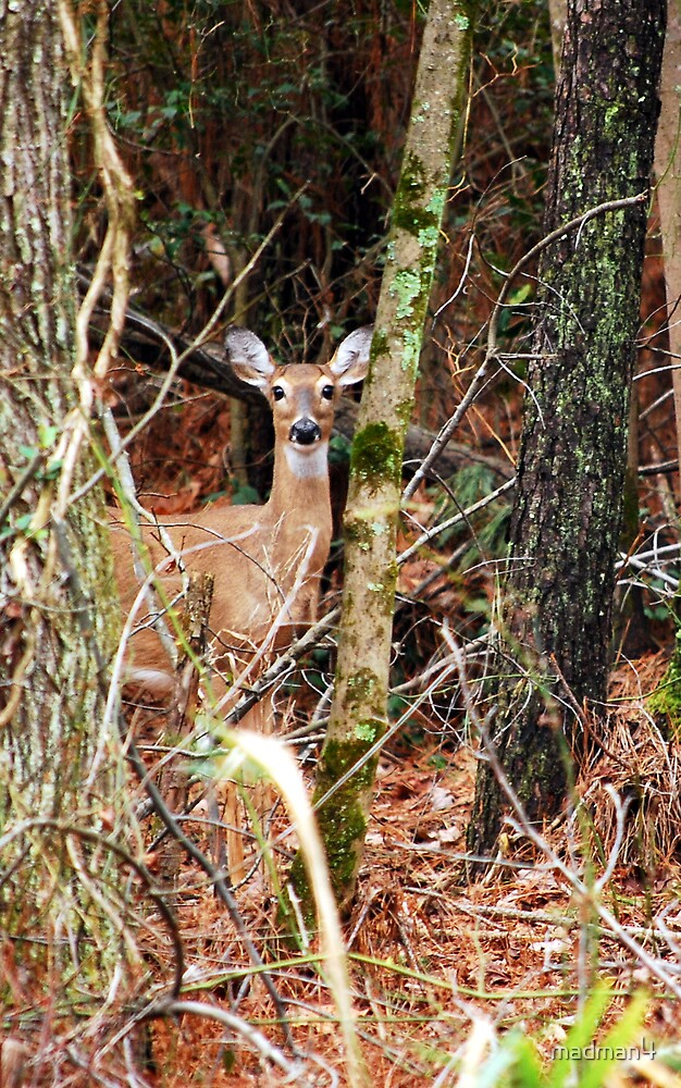 """""""Curious Doe"""" by madman4"""