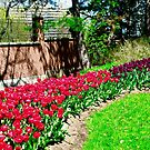 Tulips in the garden by Shulie1