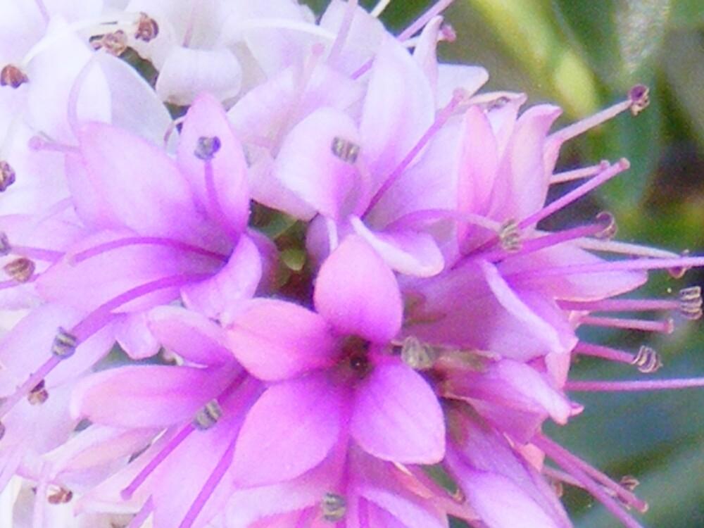 Purple by jbrinx27