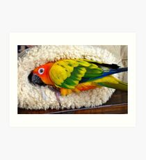 It's Snuggle Buggle Time - Sun Conure - NZ Art Print
