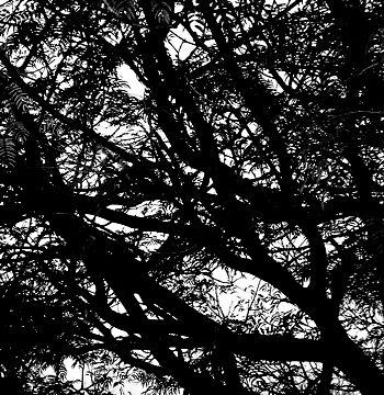 Dark Night by Jason Robins