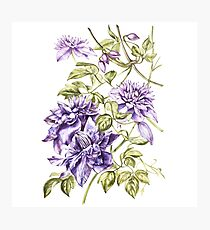 Watercolor Clematis Photographic Print