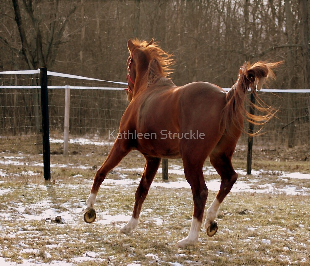 Run Like The Wind by Kathleen Struckle