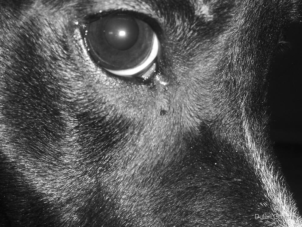 The eye by Dylan Greene