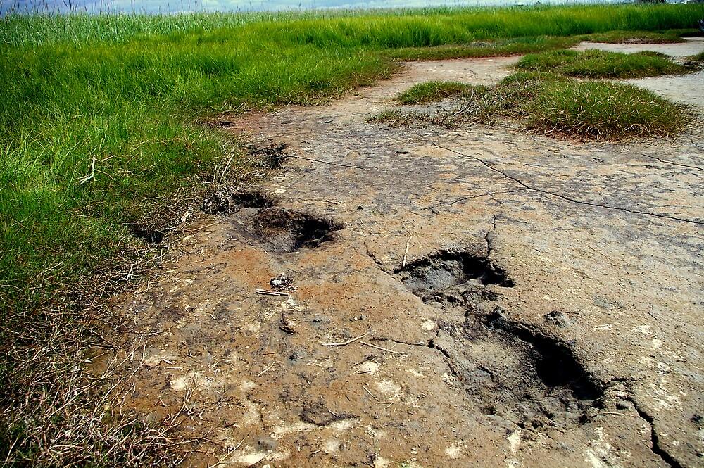 The Ending Bear Tracks by Chris Popa