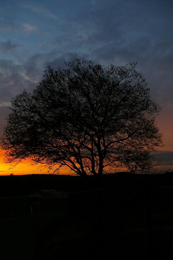 Plum Tree by Chris Popa
