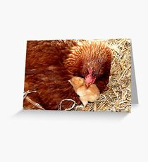 Acceptance! - Chickens - NZ Greeting Card