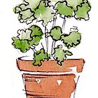 Herbs in pots - Parsley  by Maree Clarkson