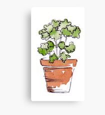 Herbs in pots - Parsley  Canvas Print