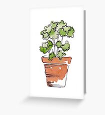 Herbs in pots - Parsley  Greeting Card