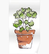Herbs in pots - Parsley  Poster