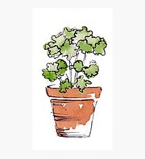 Herbs in pots - Parsley  Photographic Print