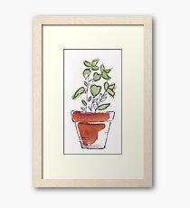 Herbs in pots - Oregano Framed Print