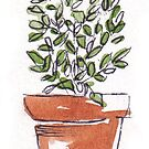 Herbs in pots - Lemon thyme by Maree Clarkson