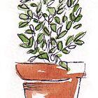 Herbs in pots - Lemon thyme by Maree Clarkson
