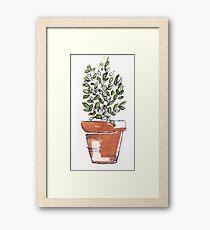 Herbs in pots - Lemon thyme Framed Print