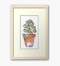 Herbs in pots - Coriander Framed Print