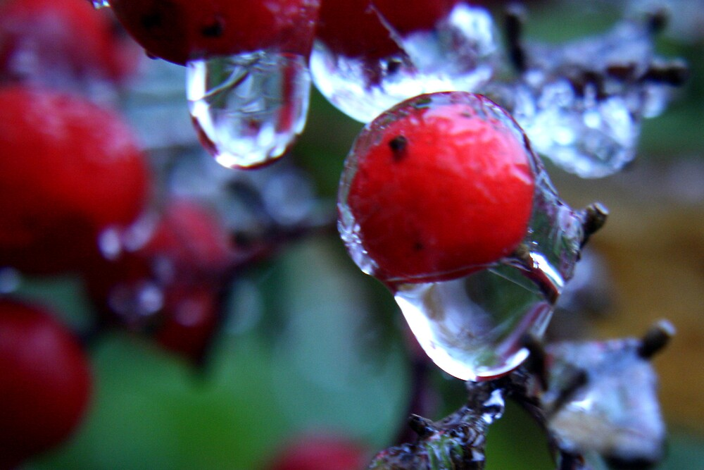 Frozen Berry by oobercanuber