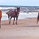 A Trio of Beach Buddies by Sandy O'Toole
