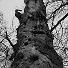 Woodpecker Tree by jenndes