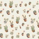 Succulents forever by Maree Clarkson