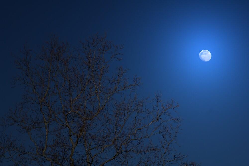 Goodnight Moon by vonnie1989