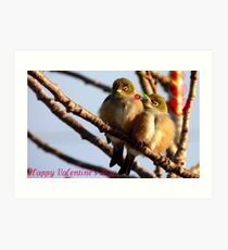 Happy Valentine's Day - Silvereye - NZ Art Print