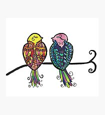 Two Colourful Birds Photographic Print
