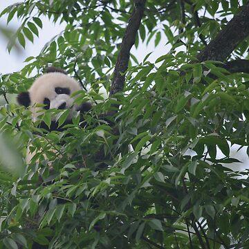 Hide-and-Seek Panda by TheIntrepidSoul